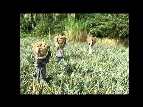 Dolefil T'Boli Growership Philippines