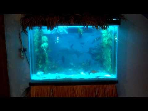 Omaha, Tx - Mikes Resort aquarium