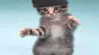 Танцы котят