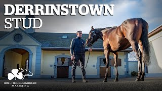 Irish Stallion Showcase 2021 - Derrinstown Stud