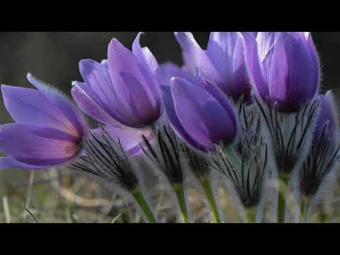 Дыхание весны.Красивая мелодия Сергея Чекалина.Музыка для души.
