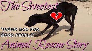 SWEETEST ANIMAL RESCUE: Dog On Deserted Island