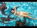 Swimming With Sharks! | Heyitssarai video