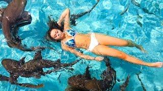 One of HeyItsSarai's most viewed videos: SWIMMING WITH SHARKS! | HeyItsSarai