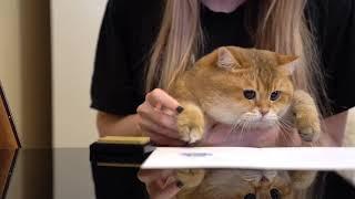 ロシアより愛をこめて。インスタアイドルのホシコさん、肉球サイン付きのグリーティングカード作成か