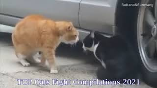 Cats Fighting Non Stop ,Real  Cats Fight  Compilation 2021