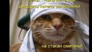 Лёня Агронович - А у кошки четыре ноги. Монтаж Б.Н.П.
