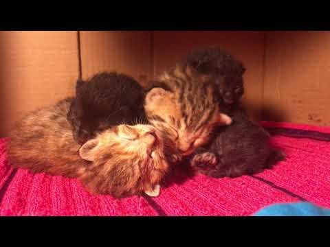 Sleepy Kitten Pile! Cute Kitten Sounds :)