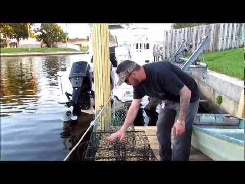 Blue Crab South Florida What You Need To Know