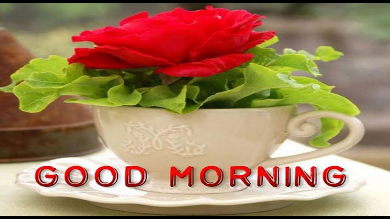 latest good morning wishes sms greetings whatsapp video message youtube