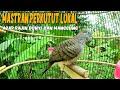 Masteran Perkutut Lokal Agar Rajin Bunyi Dan Manggung  Mp3 - Mp4 Download