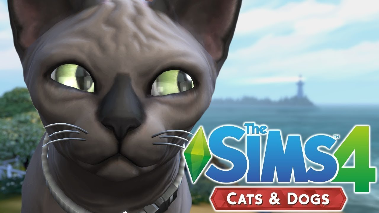 Cat Breeding The Sims 4 Cats And Dogs Episode 29