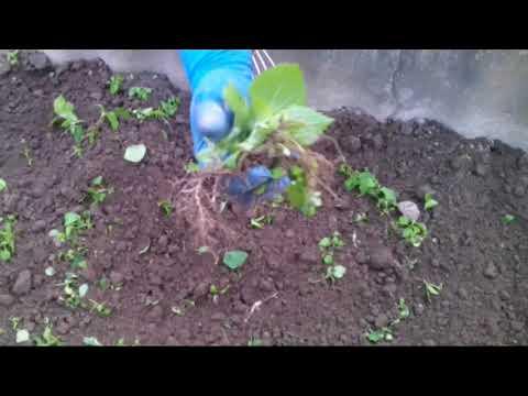 Вопрос: Каким инструментом проще полоть огород?