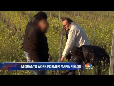 "Terrified ""Migrants"" Toil On Land Taken From The ""Mafia"" In Corleone, Sicily"
