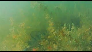 Подводная охота,первые шаги.Spearfishing.The first steps.