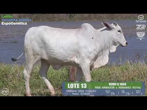 LOTE 13 - Leilão Genética Aditiva ExpoGenética 2019