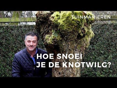 De knotwilg en andere knotbomen snoeien: Hoe doe je dat?   Tuinmanieren