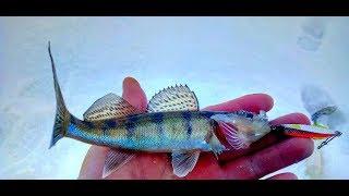 Рыбалка со льда - Камское Устье. Рыболовные путешествия.
