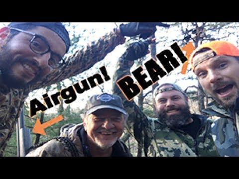 Airgun Hunting for Bear with Big Bore Air Rifle : American Airgunner