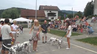 Zbigec 2015. Awards Ceremony Of The First Show Of Dalmatian Dogs