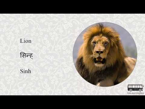 Learn Sanskrit Visual Dictionary - Animals via Videos by GoLearningBus(3K)