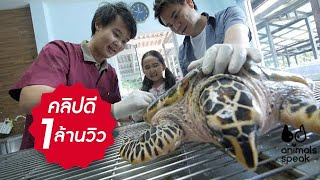 Animals Speak [by Mahidol] ชีวิตอิสระของเต่าทะเล (13 เมษายน 2557)