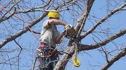 Emergency Tree Removal Jacksonville Fl