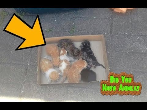 Man Saves Kittens And Refuses To Leave Without The Mom, After Hours Of Waiting…