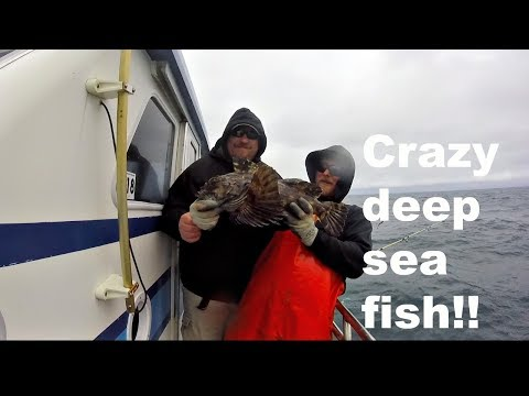 Catching Crazy Looking Deep Sea Fish!! (Depoe Bay Oregon)