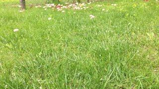 Газон цветочный.  Загородная хизнь.
