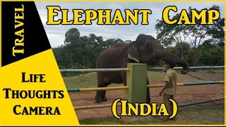 Travel : Elephant Camp in Theppakkadu, Tamil Nadu (India) – Ep 146 | Life Thoughts Camera