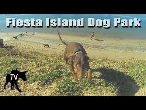 Doberman Fiesta Island   Dog Park Vlogs