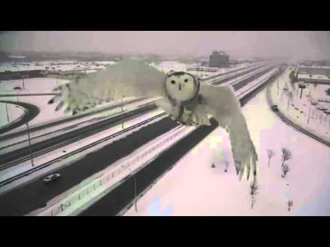 Montreal Traffic Camera Captures Stunning Images Of Snowy Owl