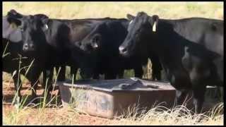 Rebuilding Your Herd After Drought - Cattlemen to Cattlemen
