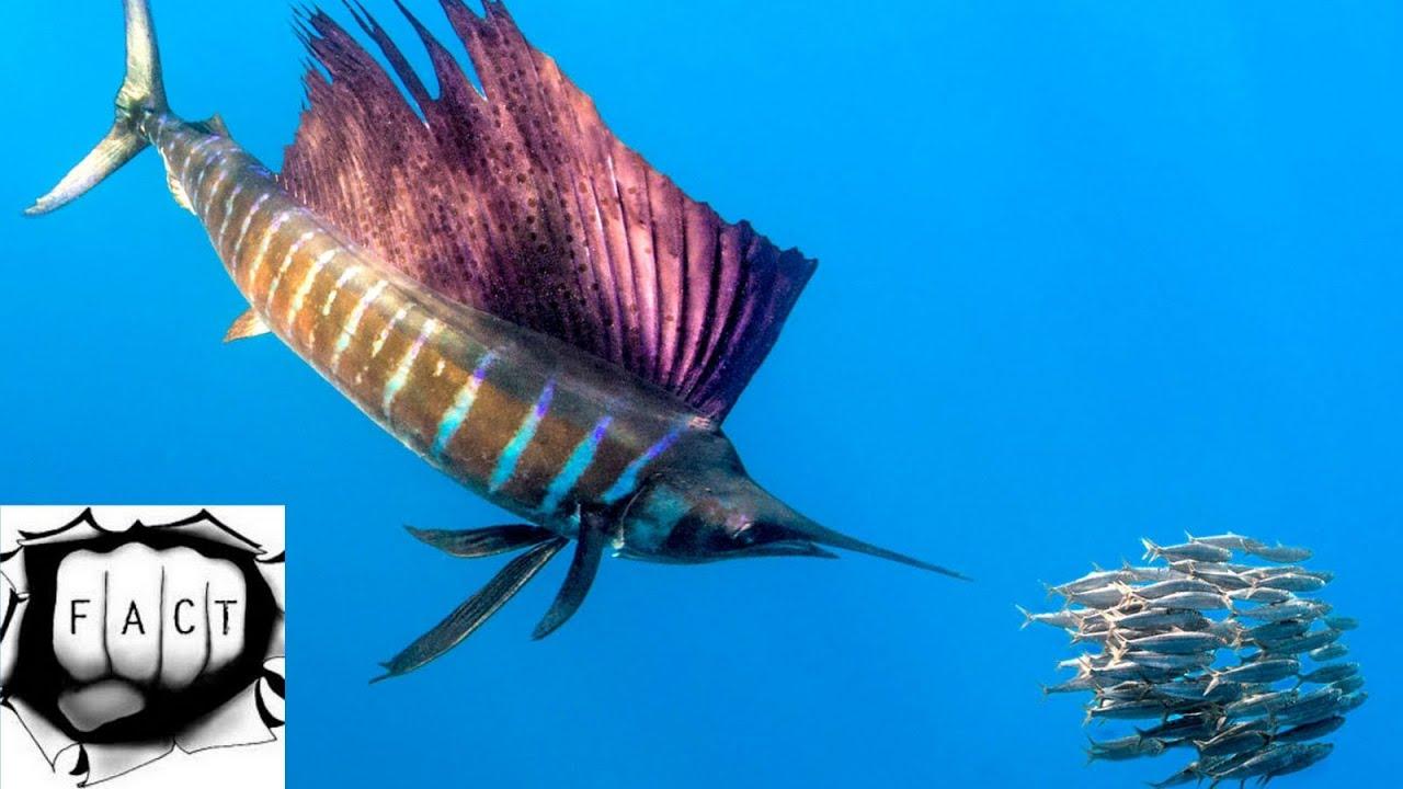 essay on aquatic animals for kids