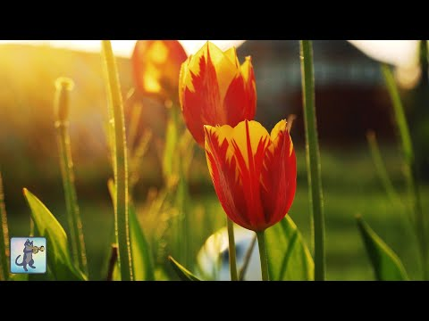 Beautiful Flowers 🌼🌷 ~ Amazing Nature Scenery & The Best Relax Music • 3 HOURS
