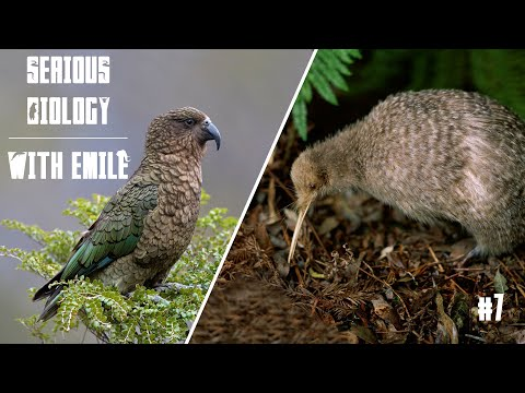 Kiwi, Kea, Weka And Other Birds Of New Zealand - Serious Biology For Kids #7