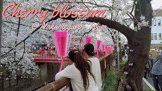 Vlog#26 Cherry blossoms at Nakameguro thumbnail