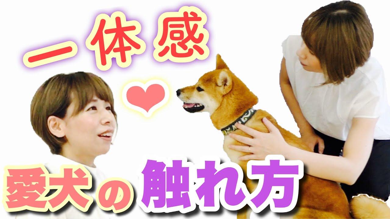 愛犬と『ひとつになる♡』触れ方がわかりました!