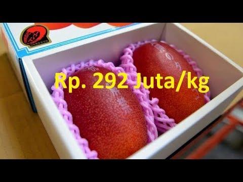 7 buah termahal di dunia ada yang mencapai Rp. 292Juta/kg
