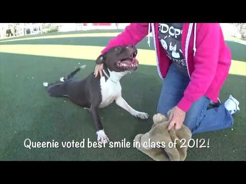 Please Help Save Queenie By Nov. 7th! Shelter Will Euthanize if Not Rescued!