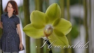 Орхидея душистая лимонка  в посылке ★ I love orchids(Дата съемки 03.07.16 Новая орхидея-обзор. Цветущая орхидея, сортовик, воск, пахнет до обеда. Orchid flowers also smell before..., 2016-09-17T17:46:10.000Z)