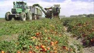 produccion de tomate en choele choel-rio negro-argentina-año 2008-2009.
