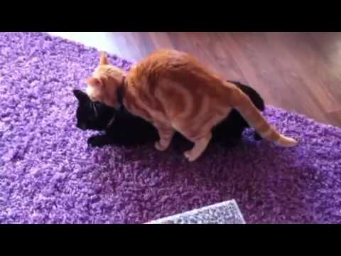 Katzenporno xD - YouTube