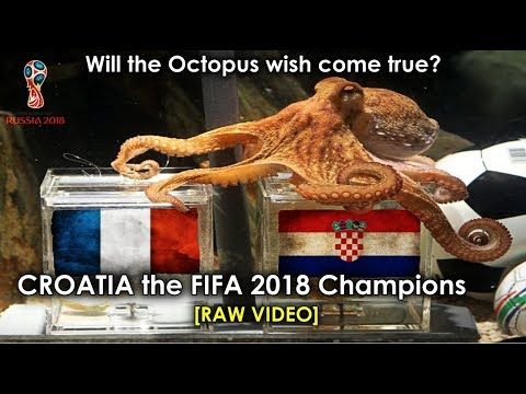 Octopus Paul Predicted Fifa 2018 Winner Is It True Who Is The Fifa 2018 Champion France Croatia Youtube