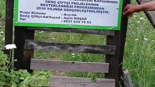 Bal Trakyam Balaban bal üretim çiftliği