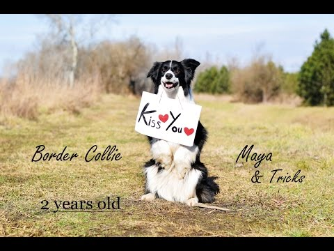 Border Collie Maya | Amazing Dog Tricks❤