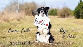 Border Collie Maya | Amazing Dog Tricks❤