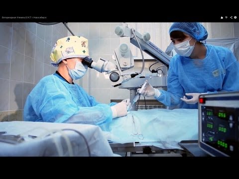 Ветеринарная Клиника «БЭСТ» г.Новосибирск