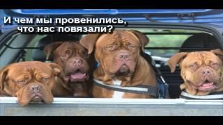 Собаки , фото приколы